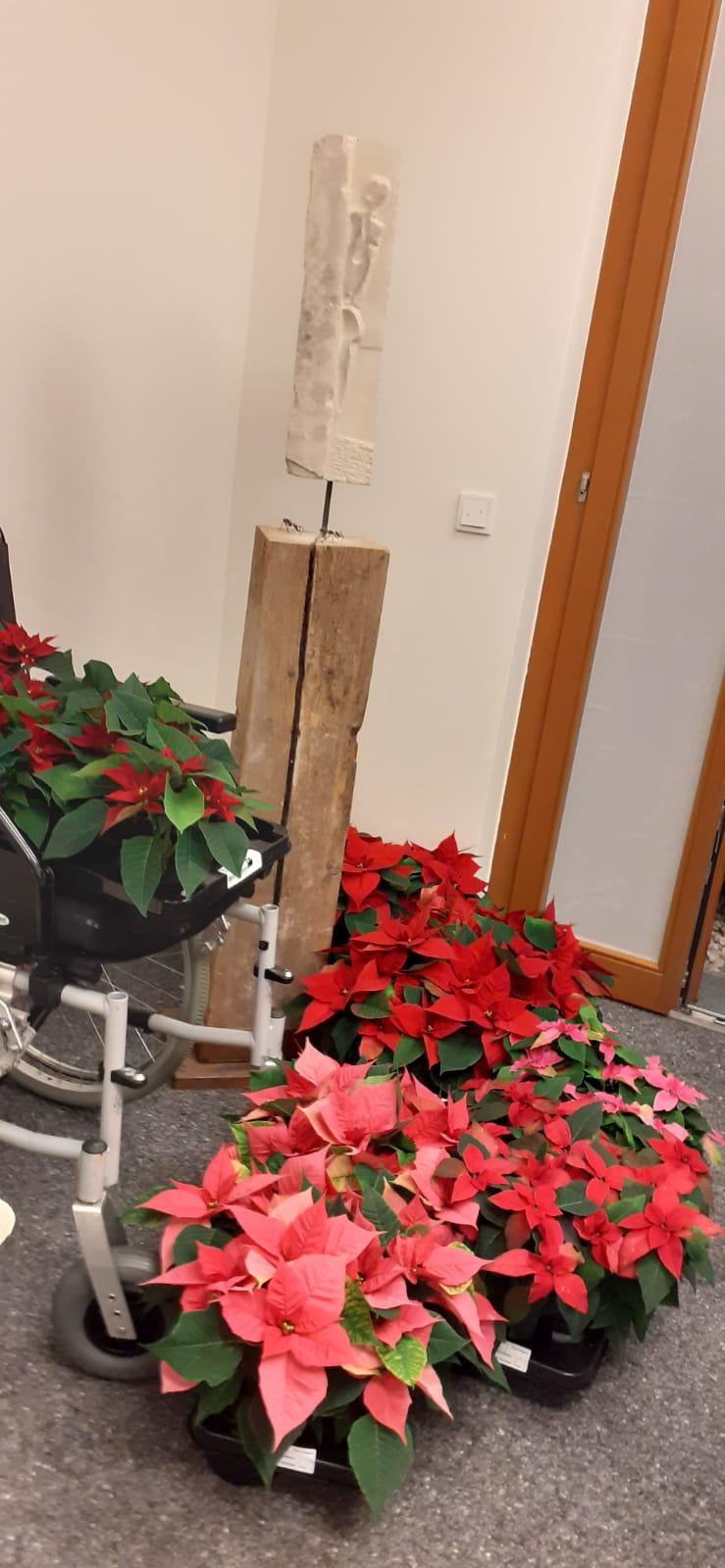 Weihnachtsstern-Spende